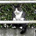 高松の池、ネコ (4)