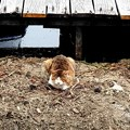 高松の池、ネコ (5)