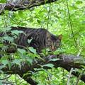 高松の池、ネコ (6)