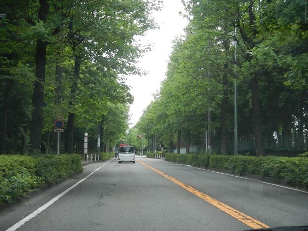 主要地方道横浜生田線