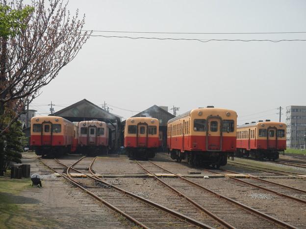 Photos: Kominato Goi Depot (authorized shot)