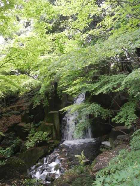 徳川園 (16) 滝
