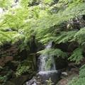 Photos: 徳川園 (16) 滝