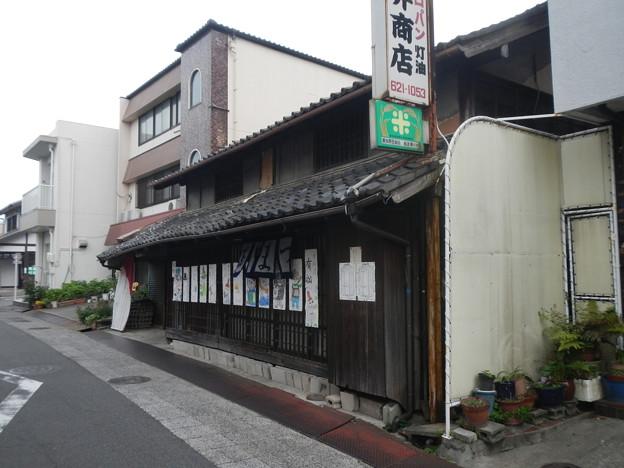 有松 (7)