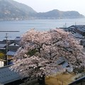 平田山・海蔵寺の桜(4)