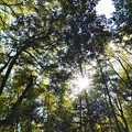 Photos: 真名井神社の森