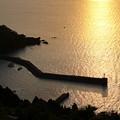 Photos: 朝陽を浴びた新井崎漁港(2)