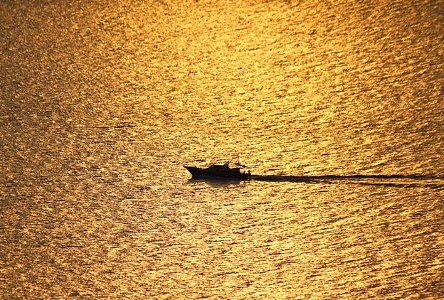 黄金色の海へ