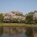 Photos: さきたま古墳公園 210331 04