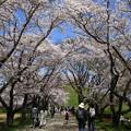 Photos: さきたま古墳公園 210331 05