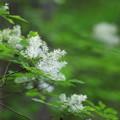 北本自然観察公園 210406 01