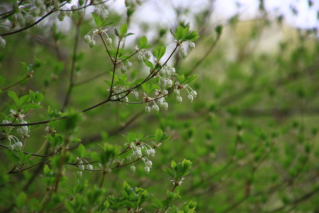 北本自然観察公園 210406 04