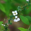 北本自然観察公園 210406 07