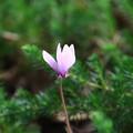 武蔵丘陵森林公園 210916 02