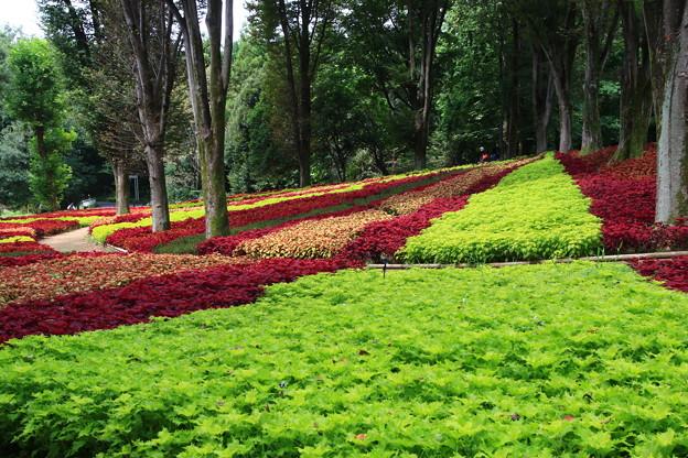 武蔵丘陵森林公園 210916 09