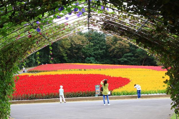 武蔵丘陵森林公園 210916 13