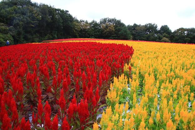 武蔵丘陵森林公園 210916 14