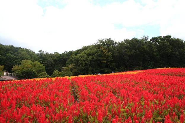 武蔵丘陵森林公園 210916 16