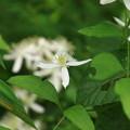 武蔵丘陵森林公園 210916 22