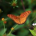 北本自然観察公園 210928 02