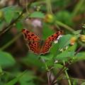 北本自然観察公園 210928 03