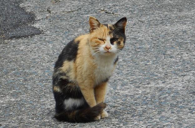 瑠璃山の愛嬌もののどら猫ニャンコ@21.3.4