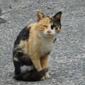 Photos: 瑠璃山の愛嬌もののどら猫ニャンコ@21.3.4