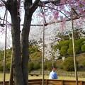 Photos: 千垂(ちだれ)の桜@千光寺山@21.3.31