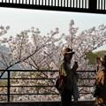 Photos: 花より団子@さつき亭21.3.31