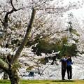 Photos: 春爛漫の桜山@千光寺公園