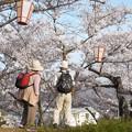 今年も綺麗に咲いたのう@千光寺山の桜
