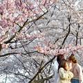 満開の桜と乙女たち@千光寺山