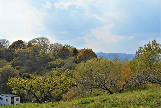 瑠璃山の春景色