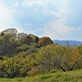 Photos: 瑠璃山の春景色