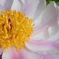 五月に咲く花@瑠璃山