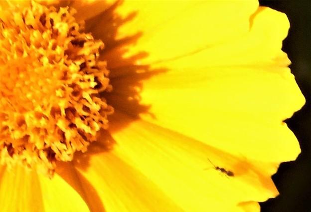 大きな花に小さなアリの幼虫