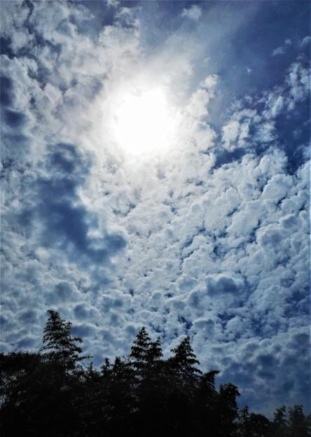 竹林の雲と太陽@梅雨の晴れ間の瑠璃山@山頂遊歩道
