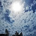 Photos: 竹林の雲と太陽@梅雨の晴れ間の瑠璃山@山頂遊歩道