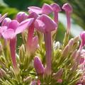 野に咲くキュートな花@瑠璃山周辺