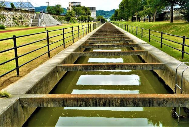 大雨・洪水警報のあとの散歩道@雨上がりの黒崎水路21.8.19