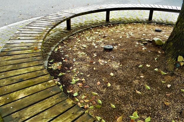 秋の気配@秋雨前線@びんご運動公園21.9.4