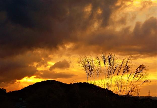 秋分の日に ススキ咲く 秋の夕暮れ@びんご運動公園21.9.23