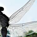 秋の朝の蜻蛉(とんぼ)さん@21.9.26