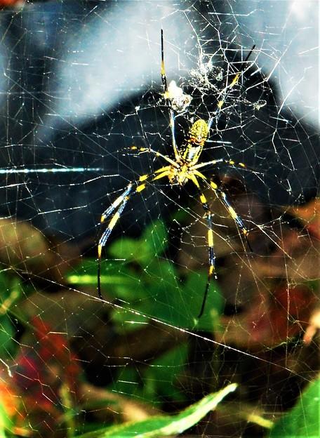規則性の無い蜘蛛の巣@瑠璃山周辺21.9.29