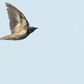 Photos: トケン類 (カッコウ科の鳥)