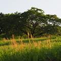 Photos: 夕日の丘