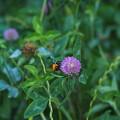 Photos: ハチの勤しみ