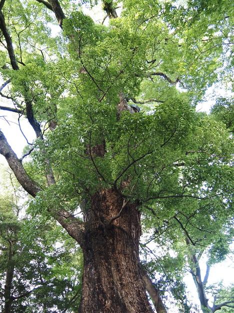 楠木パワー