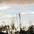 早雲山の朝