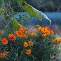 農道脇の花
